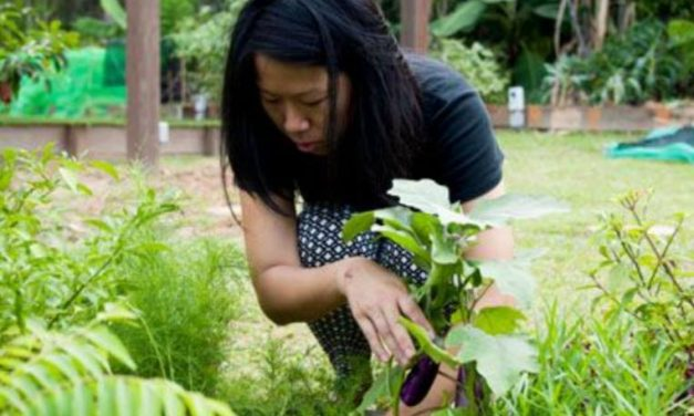 Lecture: Community Gathering and Food Futures