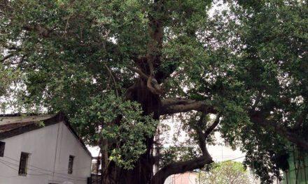 Lessons Amongst Trees